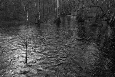 Green Swamp Wilderness Preserve, January 2019