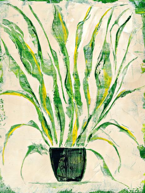 Plant Study 0005sm.jpg