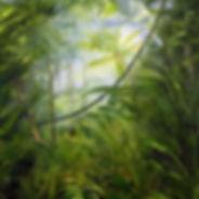 spirit of the rainforest.jpg