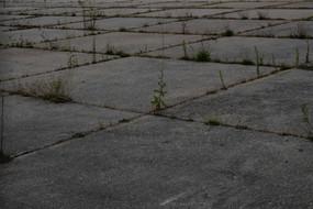 Dominic Rose: Concrete Grid