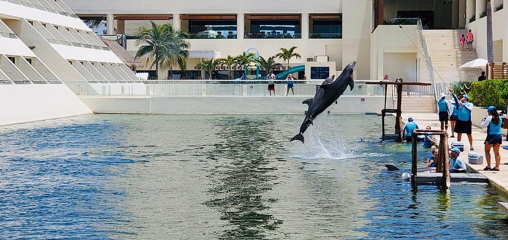 Points Diva Hyatt Ziva Swim With Dolphins