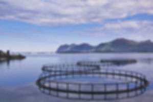 aquaculture picture.jpg