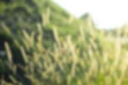 grass-1209588_1920.jpg