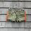 Thumbnail: Orange Fringe Army Shorts
