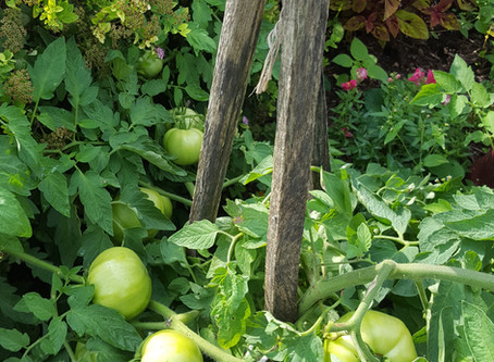 Can't Wait till Tomato Time!