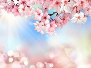 Spring Equinox Rising