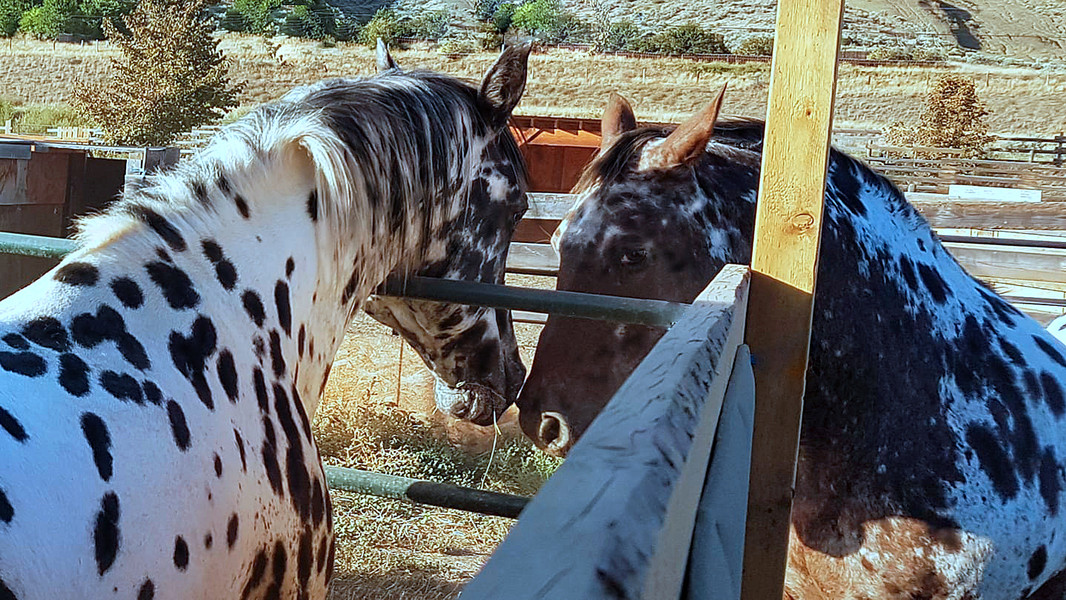 Snow Leopard and Wallowa meeting