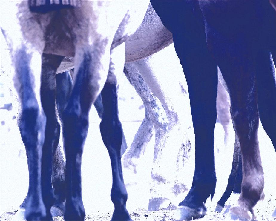 HorseLegsedited.jpg