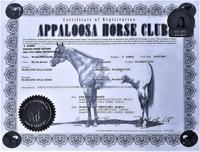 Appaloosa%2520Horse%2520Club%2520USA%2520Wakons%2520Snow%2520Leopard_edited_edited.jpg