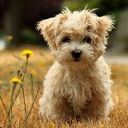 scrffy puppy.jpg