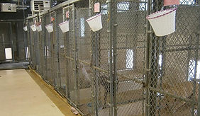 Animal Lodge kennels.JPG