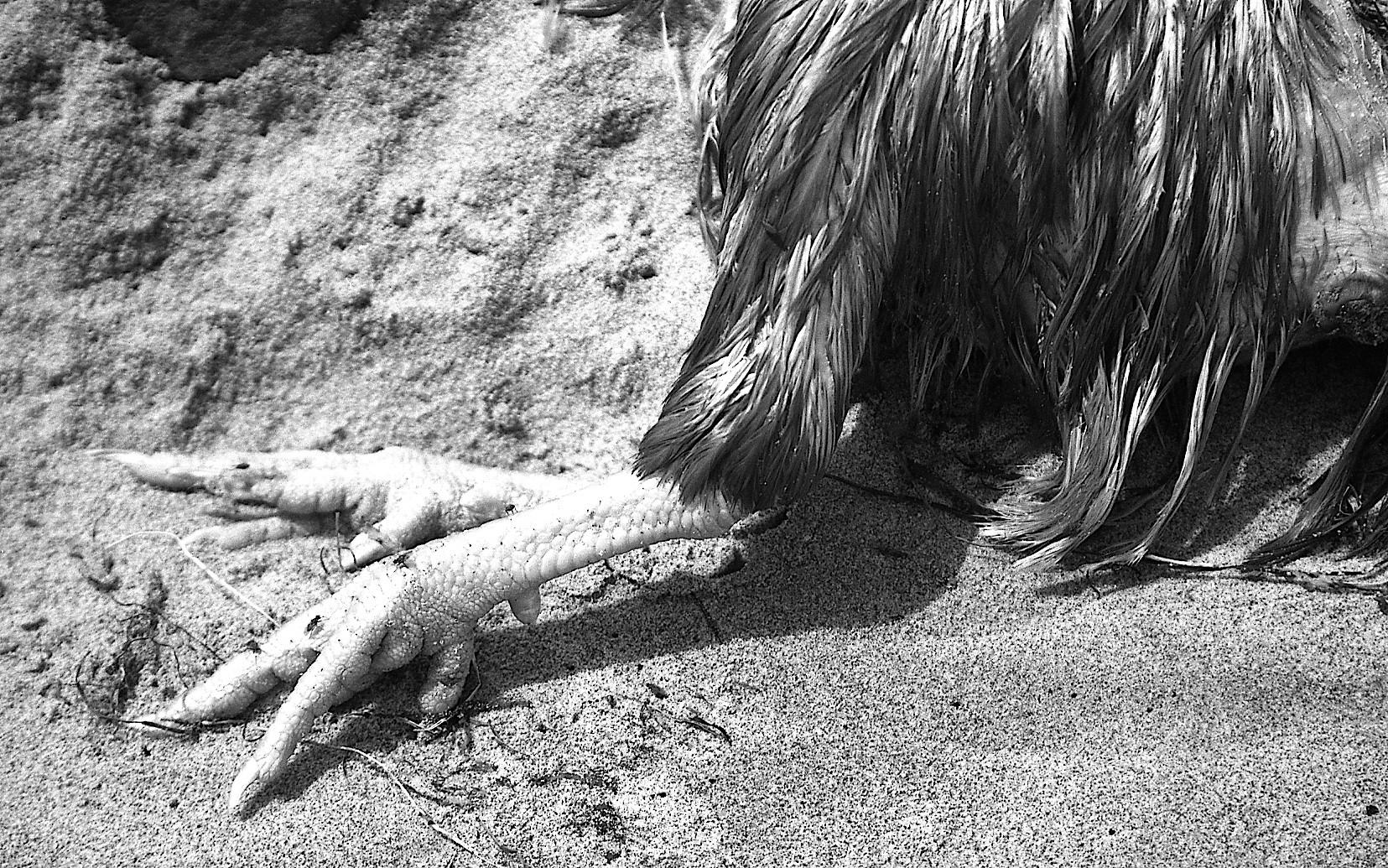 Birds on a Beach.JPG