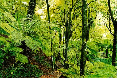 Descent into Otari-Wilton Bush