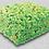 Thumbnail: Almond Pistachio Gourmet Crispy