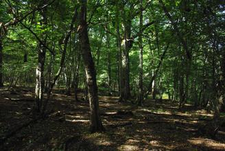 Les forêts de Neuvy