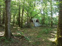 woodland camping