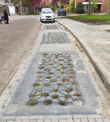 Update beplanting aquaParkers Hengelo