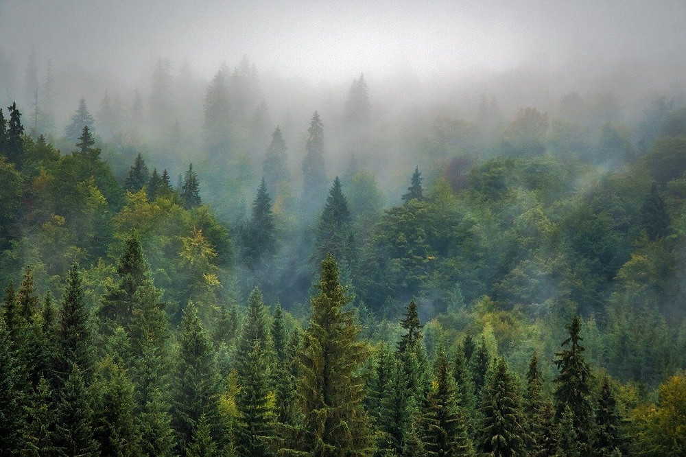A forest of trees planted by a carbon offset program for travel.