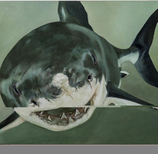 Corinne Chaix, Little Sharks Series, Acr