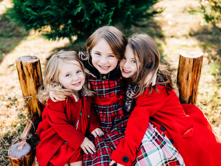 Christmas Tree Farm Minis at Bluebird Christmas Tree Farm