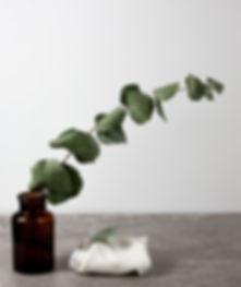 Cotton-Bamboo-21_edited.jpg