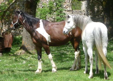 lacs des Pyrenees catalanes à cheval