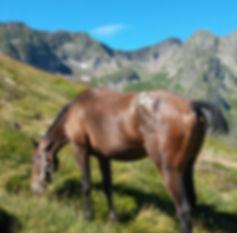 Altaïr de Tauch (DSA) chez Cheval Cathare