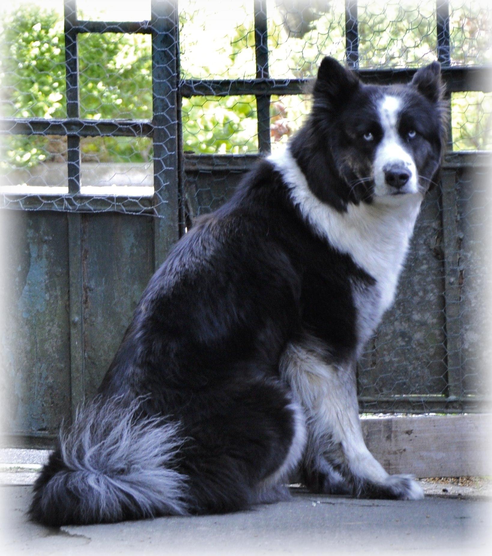 Dashka 3rd generation  (1)