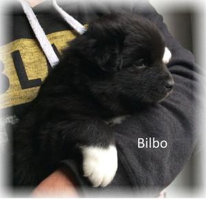Bilbo