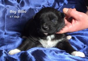 3 Bilbo.jpg