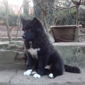Bilbo 6 month