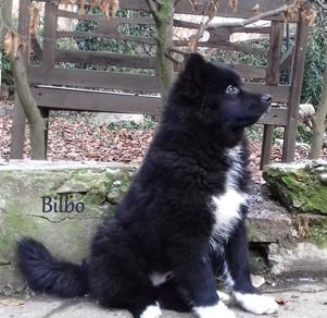 Bilbo 15 weeks