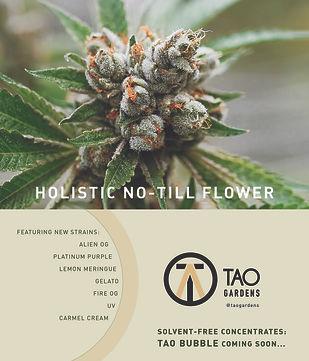 Tao Gardens Ad- November 19.jpg