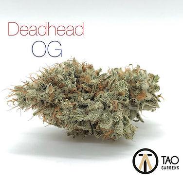 Deadhead OG.jpeg