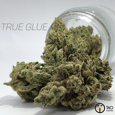 TRUE GLUE (1) (1).JPG