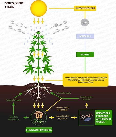 No-till-farming-applied-to-cannabis.jpg