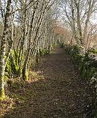 Un beau chemin du Lot bordé de murets et d'arbres