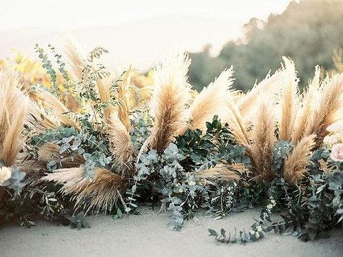Pampass Grass Backdrop