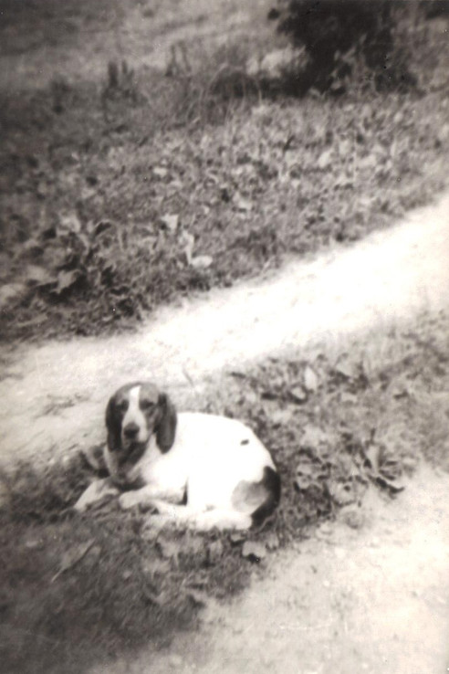 Uncle Dave's hound, Bell