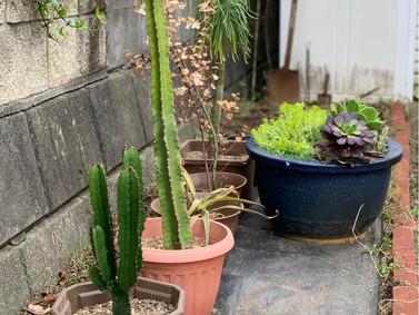 植物に元気をもらいました【春の訪れ】