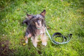 Dog portraits photos