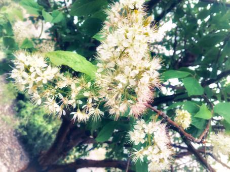 Joy & Aliveness: Nature in Bloom