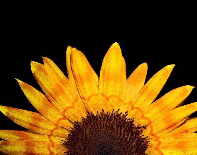 Butterfly Flower III