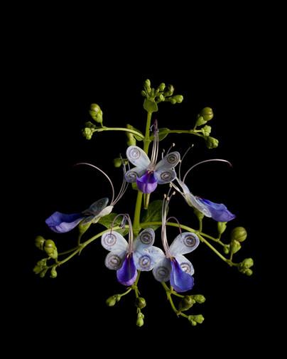 Butterfly Flower I