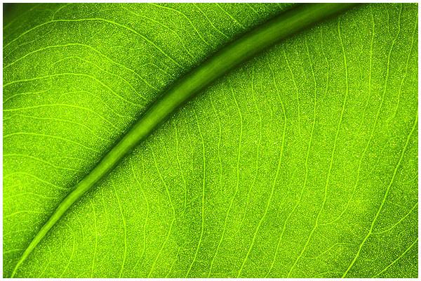Chlorophyll2.jpg