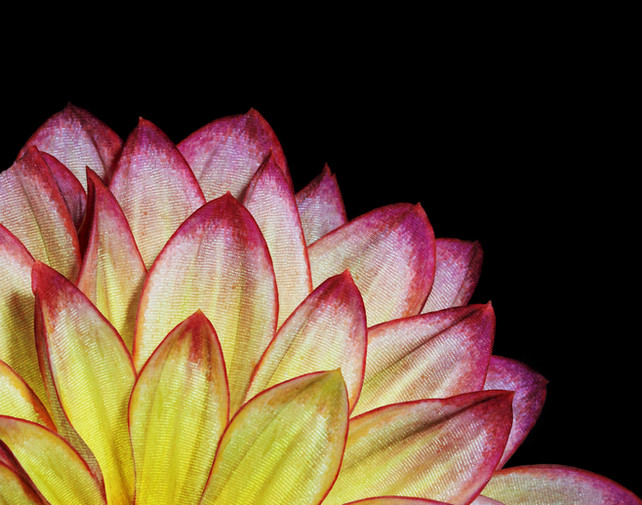 Butterfly Flower V