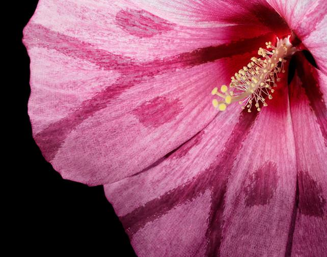 Butterfly Flower IV