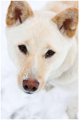 Snow Sami