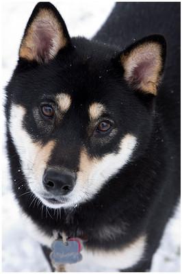 Snow Miko