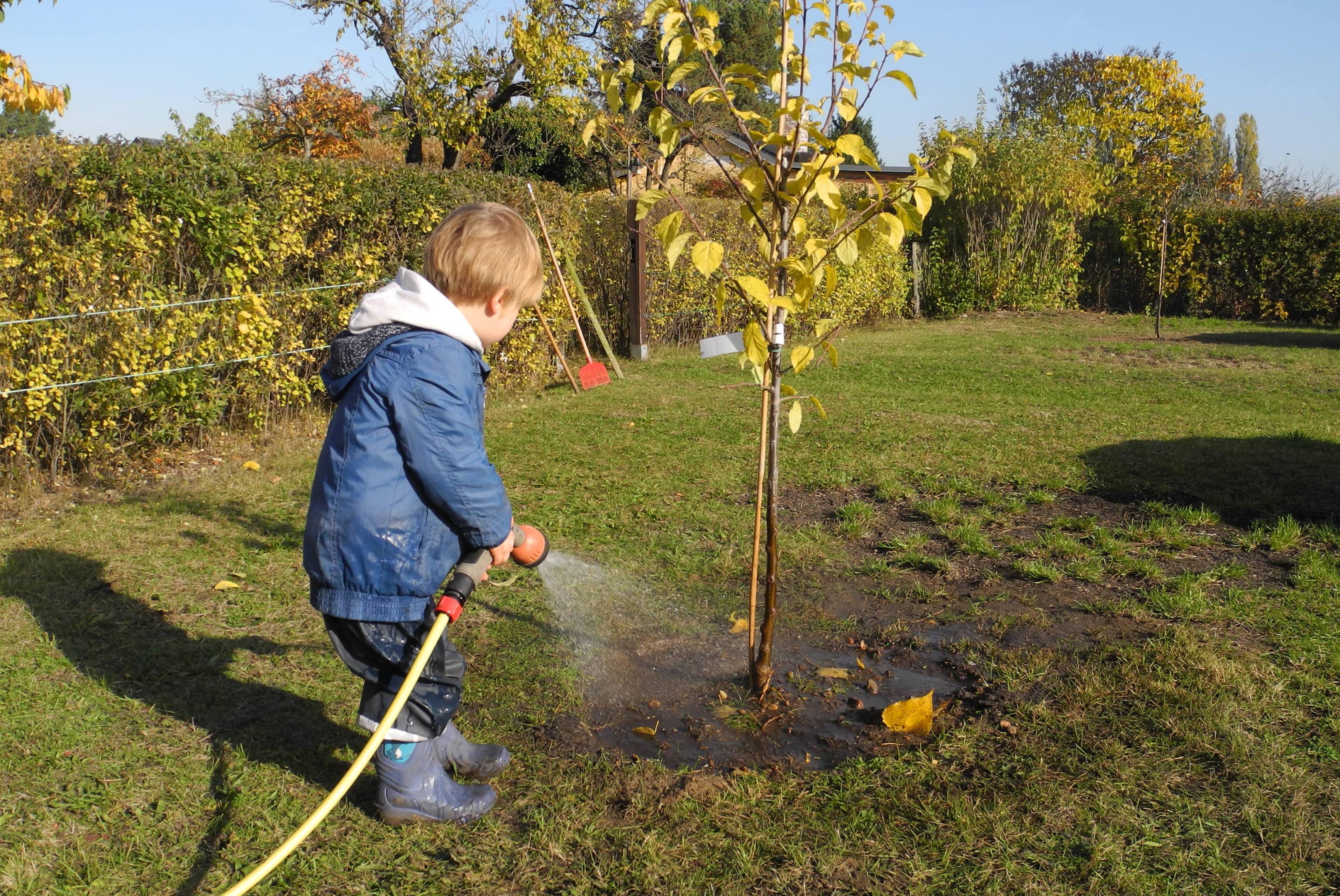 Hoffnung_Obstbaumpflanzung auf der Allme